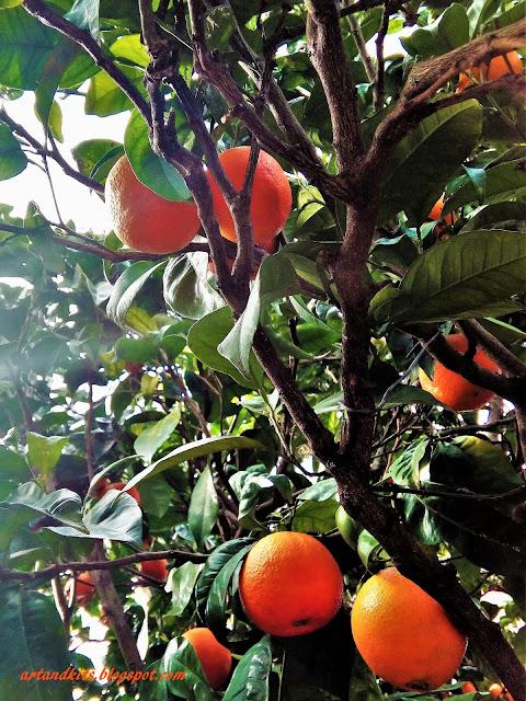 As árvores nunca se avaliam pela sua altura, ou pela sombra que fazem... mas pela doçura dos seus frutos... / Trees are never measured by their height, or by the shade they make... but by the sweetness of their fruits...