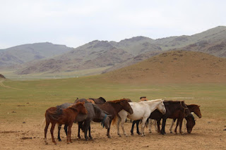 Horses congregate near a deer stone site in Bayankhongor, in central Mongolia's Khangai mountains. (c) William Taylor