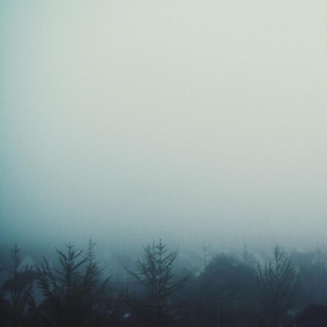 arbres brouillard