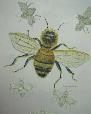 The Wildlife Trusts' 30 Days Wild. Wildlife Blog Kent Surrey Sussex London. Watercolour Bee.