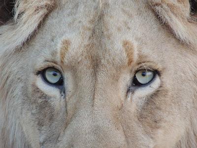 ukryty lew, muzyka, Budka Suflera, osobowość a charakter, tożsamość