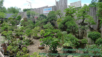 Collection of Bonzai Plants at Hidden Garden