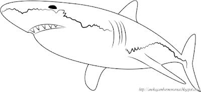 Gambar Mewarnai Ikan Hiu 2