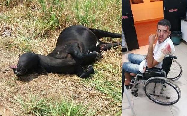 Jovem de 26 anos quase morre após colidir com uma vaca na RO 470, próximo ao lixão de