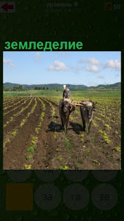 на поле крестьянин занимается земледелием, пашет на быках