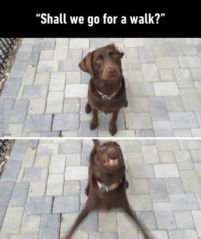 Walking  Dogs Excited