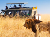 Africa Memorable Safari Experiences