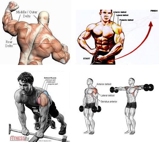 Best Shoulder Training for Huge Delts ~ .