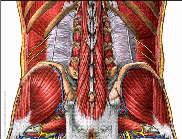 Duele la espalda en los riñones a la izquierda
