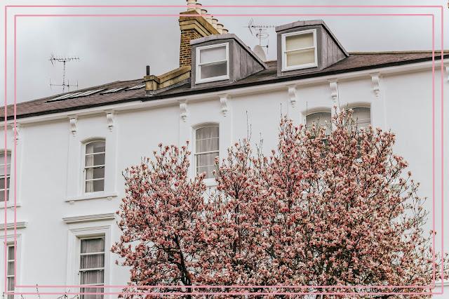 London Kensington Spring Pink Blossom Trees