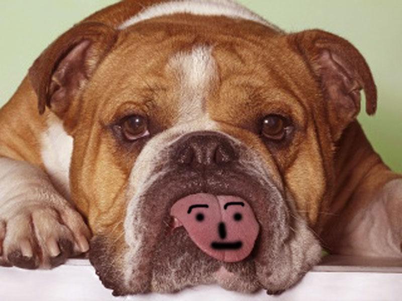 funny dog hd wallpaper - photo #36