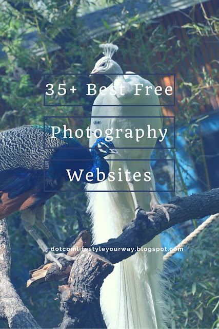 35+ Best Free Photography Websites