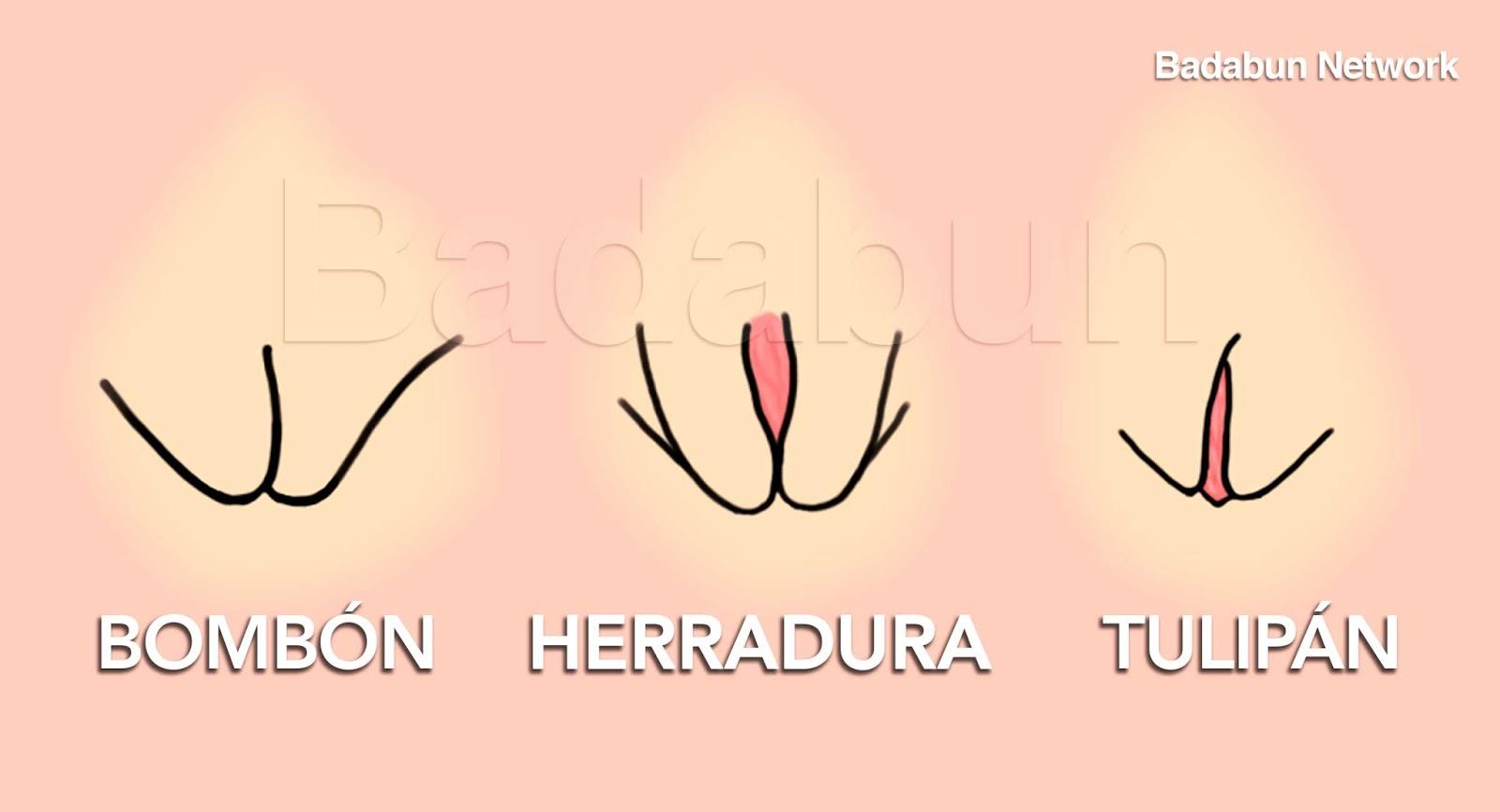 HOY.LACAJA.GURU: Los 5 tipos de Vaginas que existen. Mira por qué ...