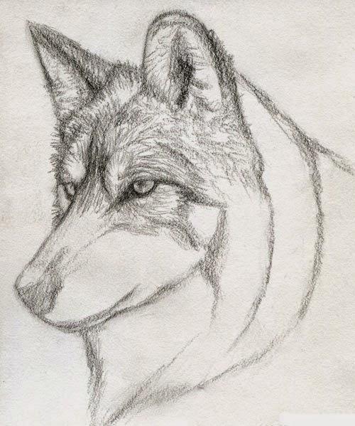 رسم ذئب بقلم الرصاص للمبتدئين