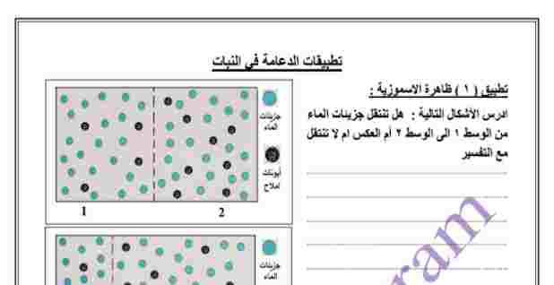 تطبيقات بيولوجيه للثانويه العامه للاستاذ حسن محرم تطبيق 2 و 3 الدعامه في النبات