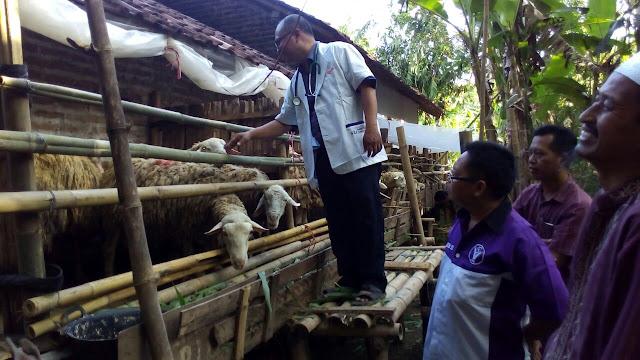 Pemeriksaan Antemortem Qurban Jejaring Lazismu Jember oleh PDHI Jatim VII