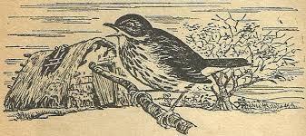 El pájaro Crespín