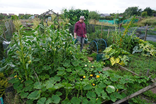 rather messy plot in August- Carrie Gault 2018