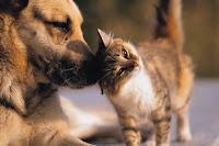 Il premio di polizza per un'assicurazione animali domestici mista può essere elevato