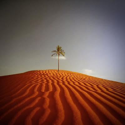 Paisaje con un árbol en el desierto