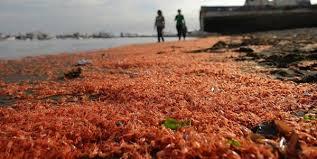 بعض من أغرب حوادث القتل الجماعي للأسماك والحيوانات.