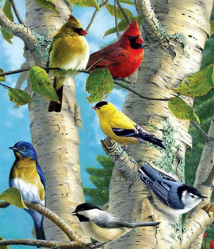 Pássaros Coloridos