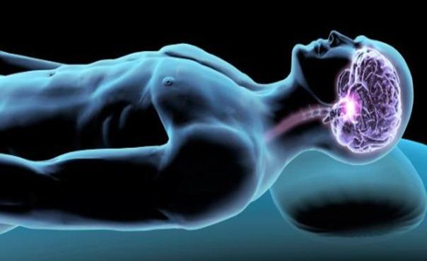 cerebro sueño