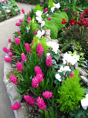 Allan Gardens Conservatory Spring Flower Show 2012 pink hyacinths white cyclamen by garden muses: a Toronto gardening blog