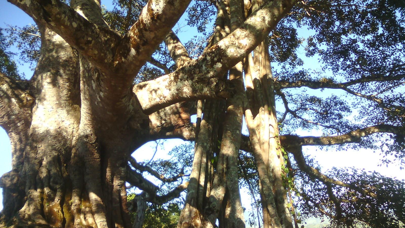 Picsindia National Mizoram State Animalbirdetc Tlaizawng Par