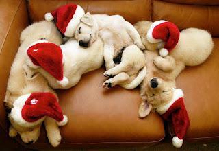 cute-dogs-sleeping-dp