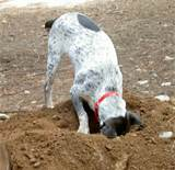 como parar un perro que hace excavación