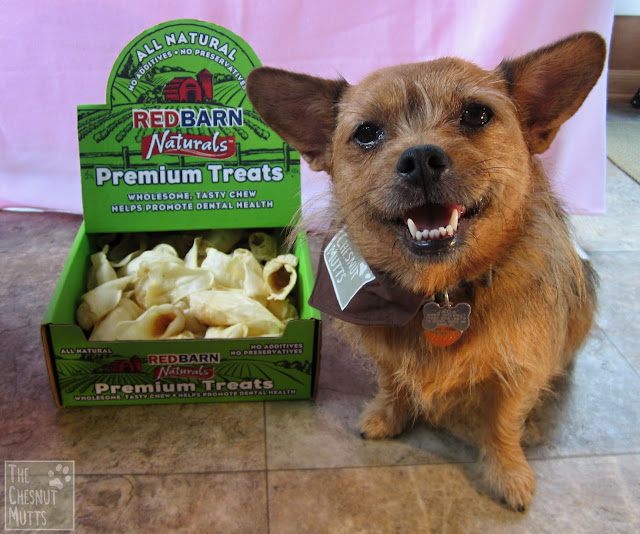 Jada next to a box of RedBarn Premium Treats