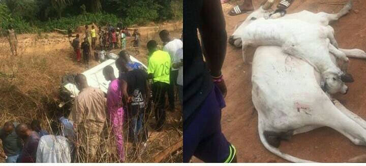 TB Joshua's church members involved in road accident with cows