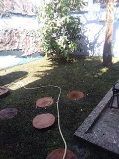 Harga jual rumput gajah mini di babatan wiyung surabaya barat