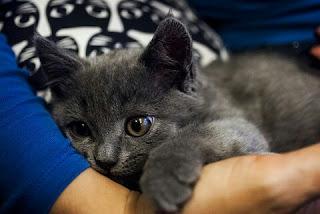 Cara Mengatasi Kucing Sedang Stres