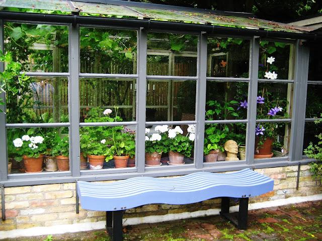 Pelargonier bak et vindu