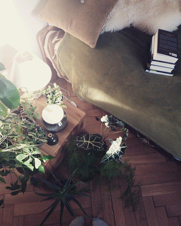 Czy nadmiar roślin jest szkodliwy?