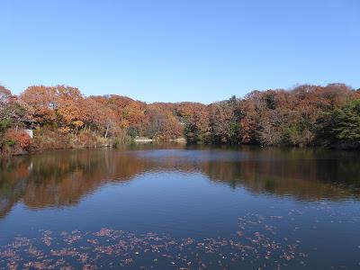 交野市・白旗池(しらはたいけ)の紅葉