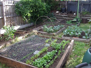Raised Bed Gardening Tips