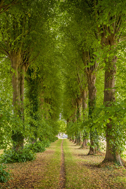 Lime trees line the way to the church at Ascott under Wychwood  by Martyn Ferry Photography