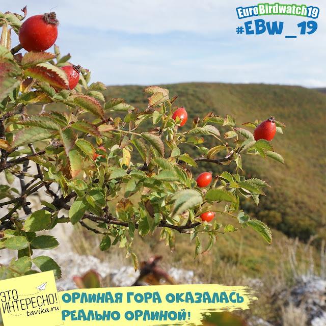 Орлиная гора. Крым. Белогорский район