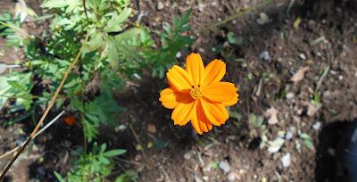 ひっそりと誇らしげに咲く花