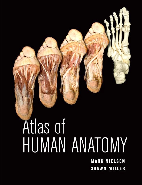 Atlas Of Human Anatomy Nielsen Miller Booksmedicos