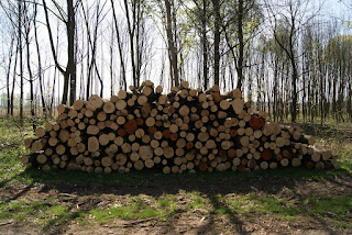 Holzstämme liegen am Wegesrand