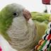 Understanding Parrot Instinct