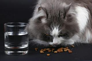 Cara Membuat Makanan Kucing Kering Sendiri Yang Sehat