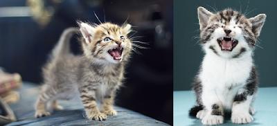 Kediler Ne Zaman Diş Değiştirir?