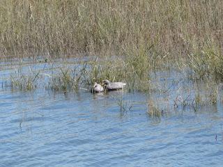 Faux canard - Leurre pour la chasse - Appeau - Canard flottant