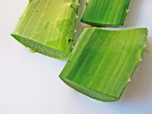 Benefits Of Aloe Vera For Animals