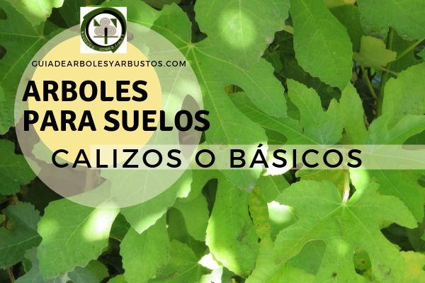 Arboles para suelos calizos o básicos, lista de especies especifico para este tipo de suelos